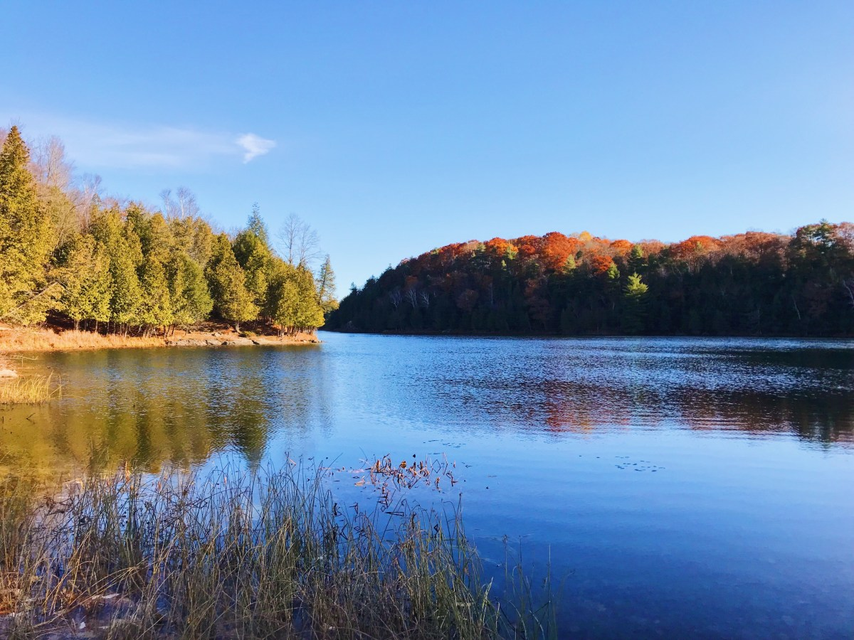 Rideau Trail – Falling in love with November at Gould Lake